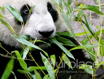 Sichuan Giant Panda Sanctuary